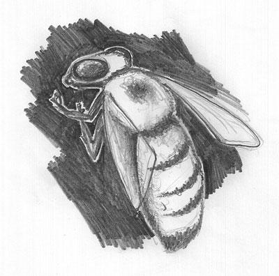 bee_sketch02