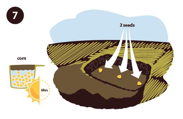 farming step 03