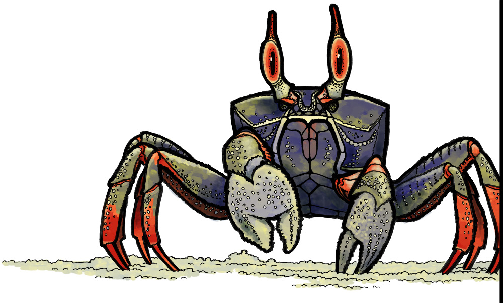 horned-ghost-crab